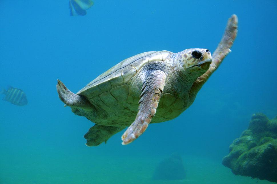 Die Schildkröte ist die Mutter aller Heilungsenergie. Von ihr erhalten wir Schutz, die Fähigkeit zur Innenschau, unendliches Wissen und das richtige Tempo.
