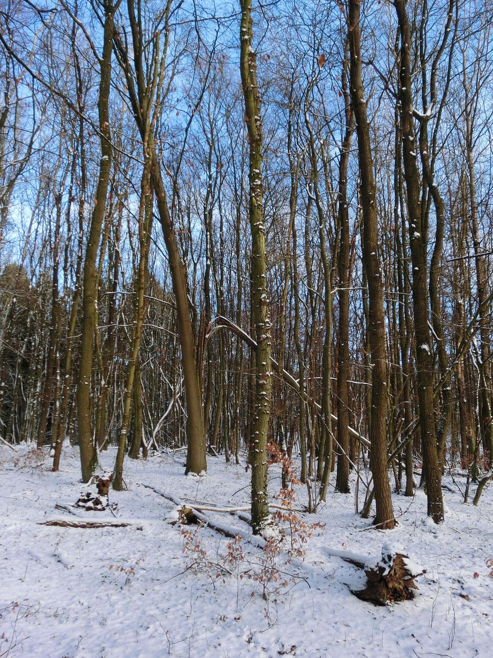Winterimpressionen im Fierth bei Schürsdorf
