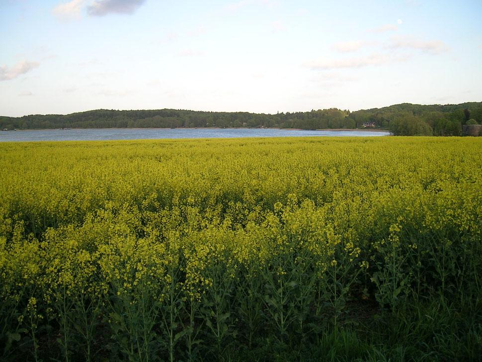 Fünfte Jahreszeit am Gr. Pönitzer See bei Gut Garkau