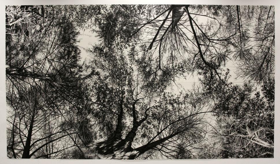 Forest, 2010, Kohle auf Papier, 200x350 cm