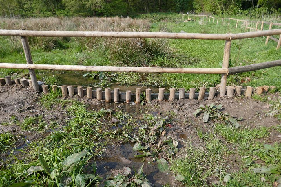 Kleiner Bachlauf mit Sumpfpflanzen