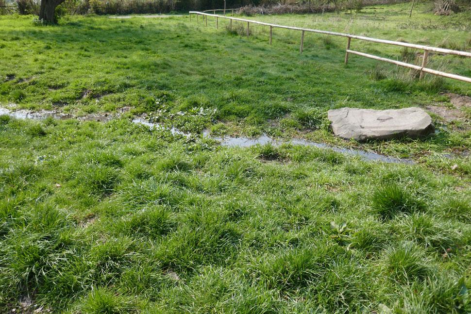 Kleiner Bachlauf mit Sumpfpflanzen und Grasbewuchs