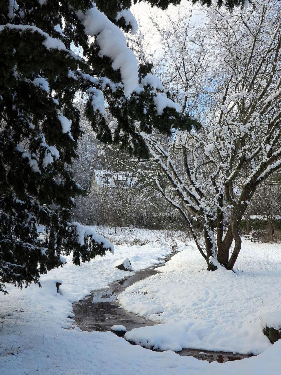 Feuchtgebiet am Hindenburgplatz im Winter