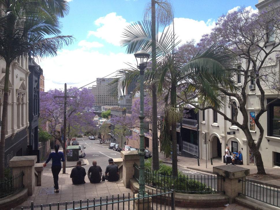Eine Seitenstraße in Sydney - der Frühling ist da und alles blüht.