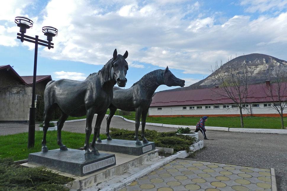 Tersker Gestüt Терский конный завод