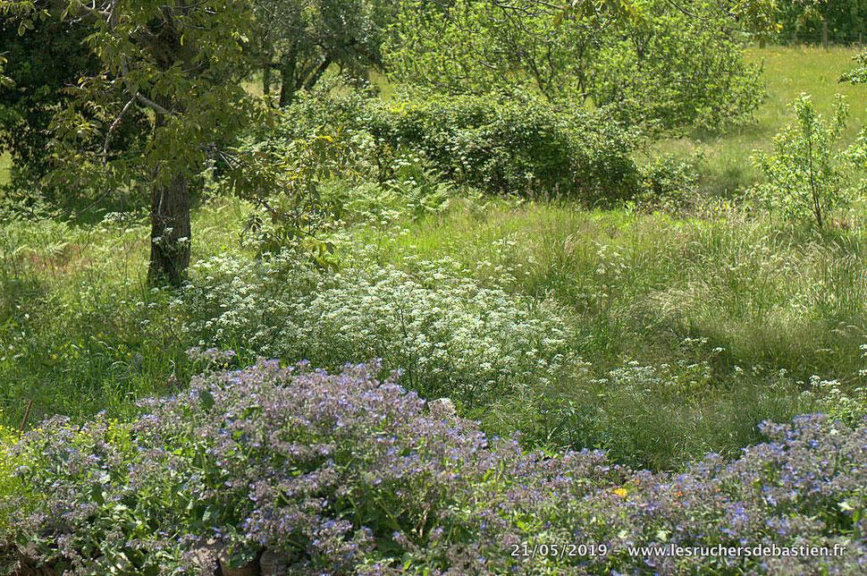 Jardins, praieries au printemps en Cévennes