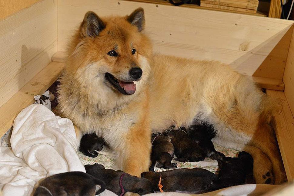 Glückliche Mama mit 9 Welpis