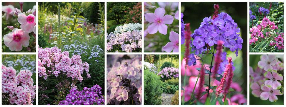 PROFIDOR Gartenbedarf - Gartenversand - Biogartenversand - Gartenshop