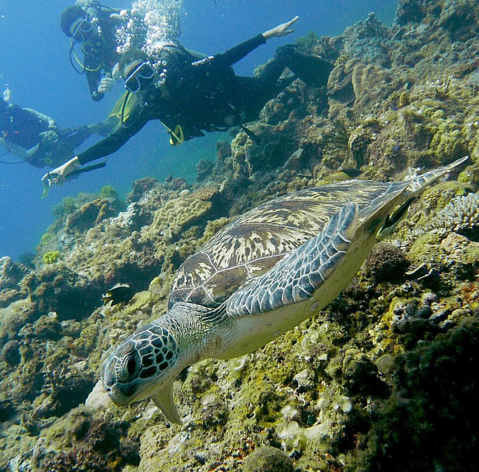 Une pose ridicule mais une rencontre avec une tortue