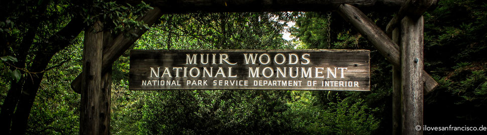 Muir Woods Ilovesanfrancisco De