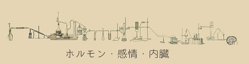肝臓と腎臓は血液の化学工場