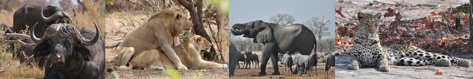 Jabulani Afrikareisen - Footer Image