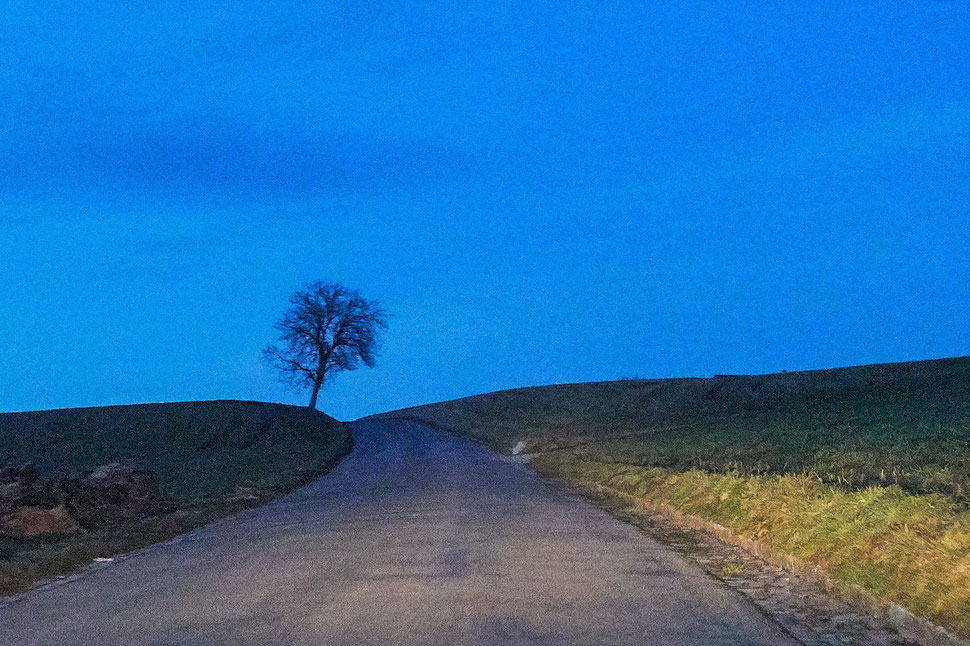 The image shows a nocturnal photograph of a road going up a hill and a tree in the light cone of a car's headlights.