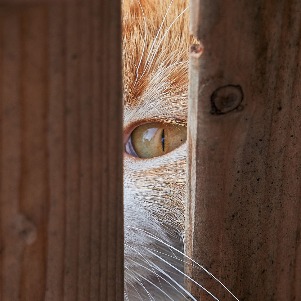 The image shows the photograph of a cat's eye peering through a slot of a wooden crate. You can also see a bit of fur and some whiskers.