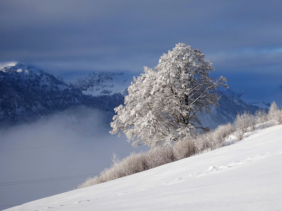 The image shows the photograph of a snow covered tree lit by the morning sun against the background of clouds, fog and mountains.
