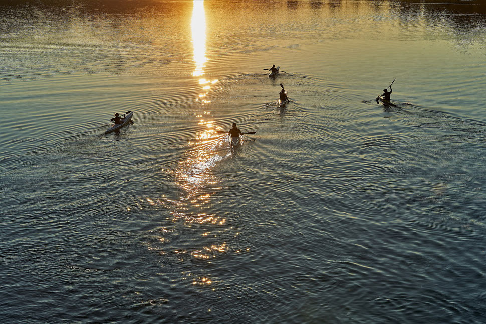 The image shows the photograph of a bouquet of tulips in front of a window.