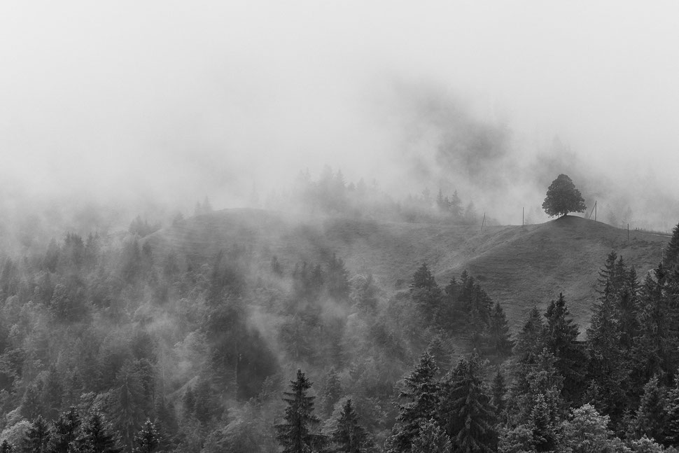 The image shows a photograph of a foggy lancscape close to the Napf (Switzerland).