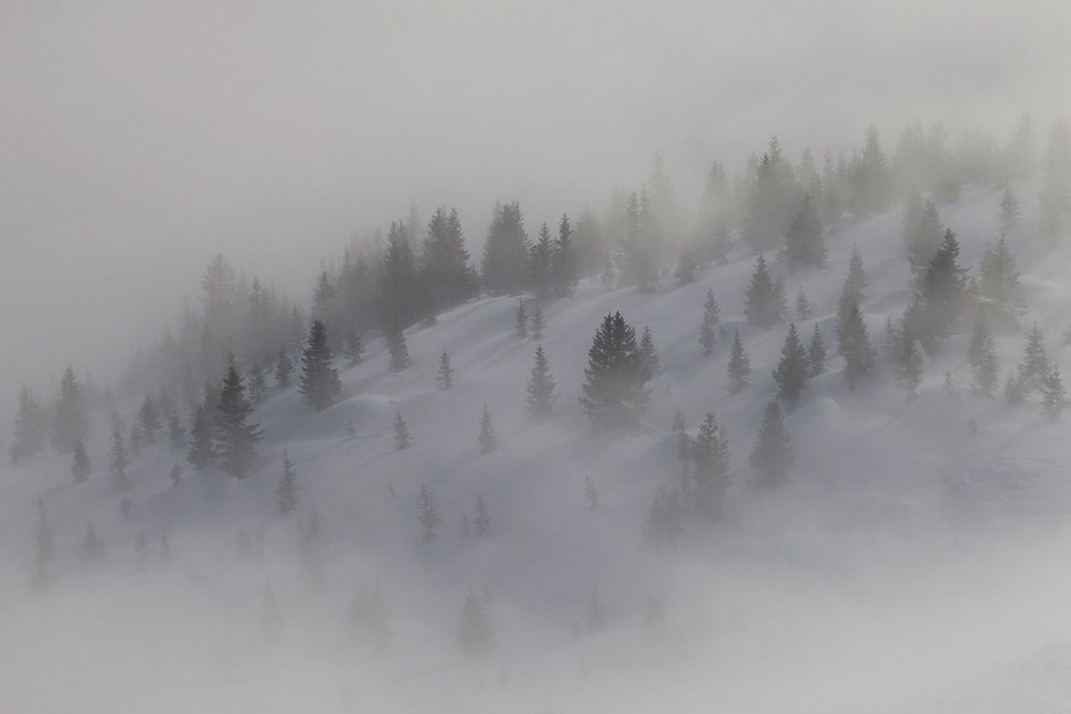 The image shows the photograph of a winter landscape with firs and fog faintly lit by the sun.