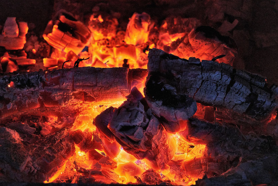The image shows the close-up photograph of a twig, which is covered by some kind of yellow and white fungus.