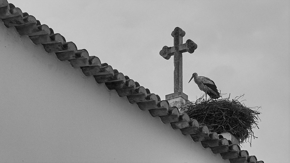 The image shows the black and white photograph of a stork standing in its nest next to a cross on the roof of a church.