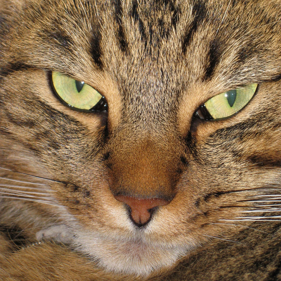 The image shows the close-up photograph of a cat's face.