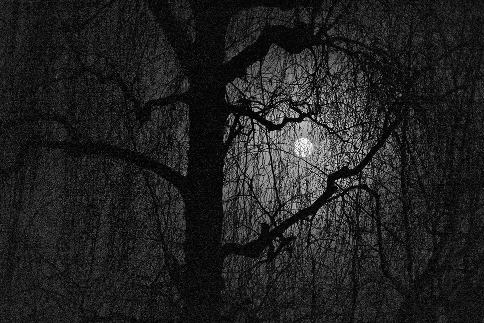 The image shows the photograph of a mountains in the Swiss Alps above a sea of fog.