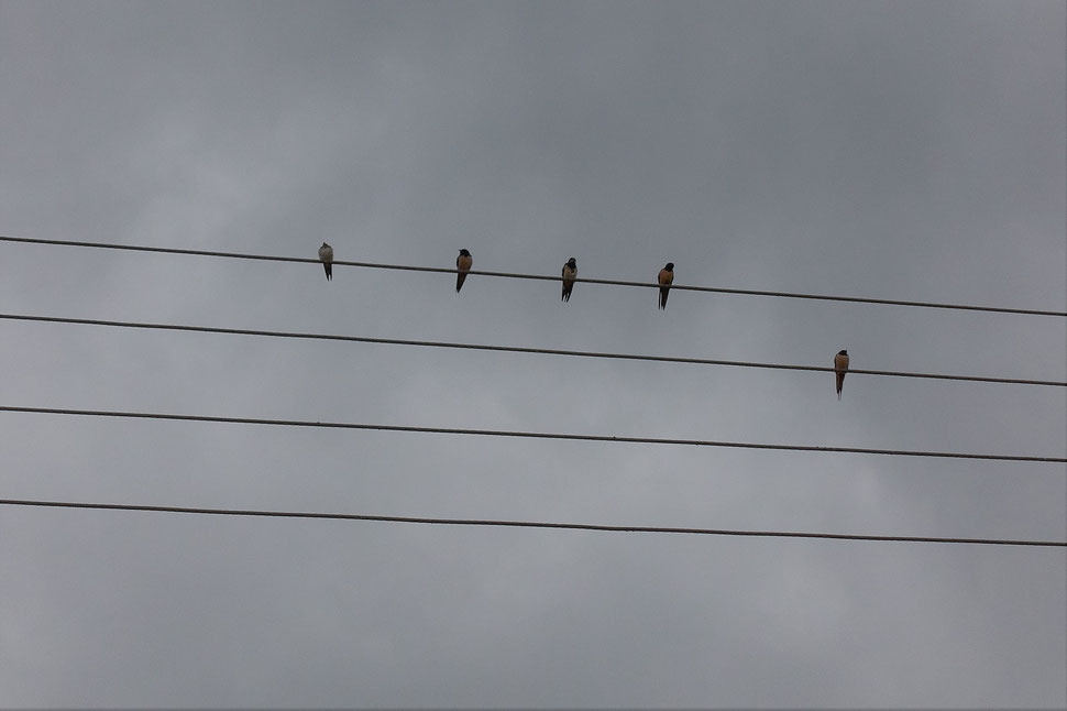 The image shows the photograph of five birds sitting on wires against a grey sky.