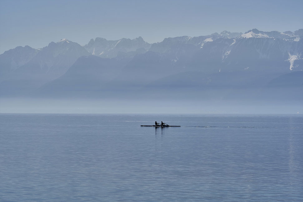 The image shows the photograph of a black bird sitting on a telephone pole against the background of a blue sky.