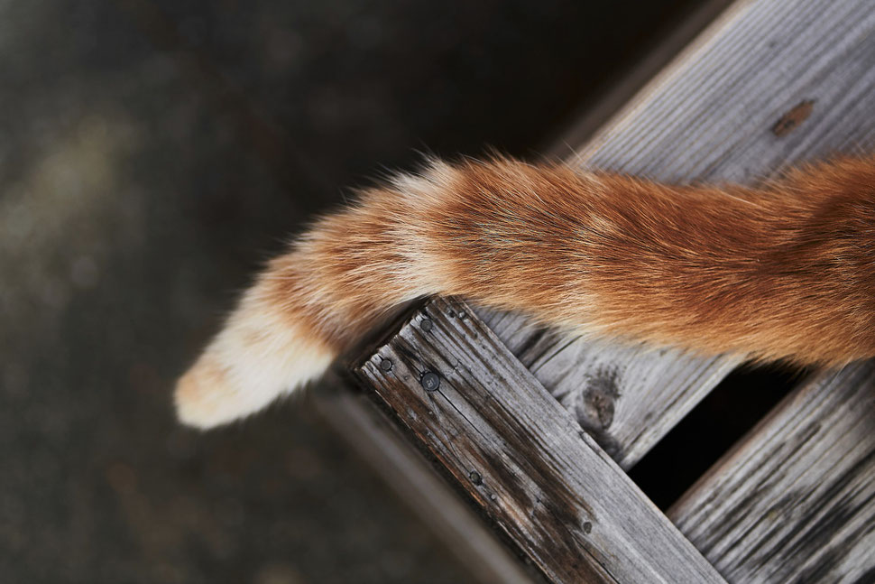 The image shows the photograph of a cat's claw reaching through a slit in a wooden crate.