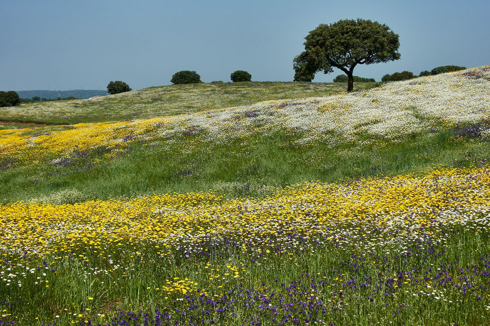 The image shows a photograph of a landscape with trees and grass and beautiful yellow, white and purple springtime flowers.