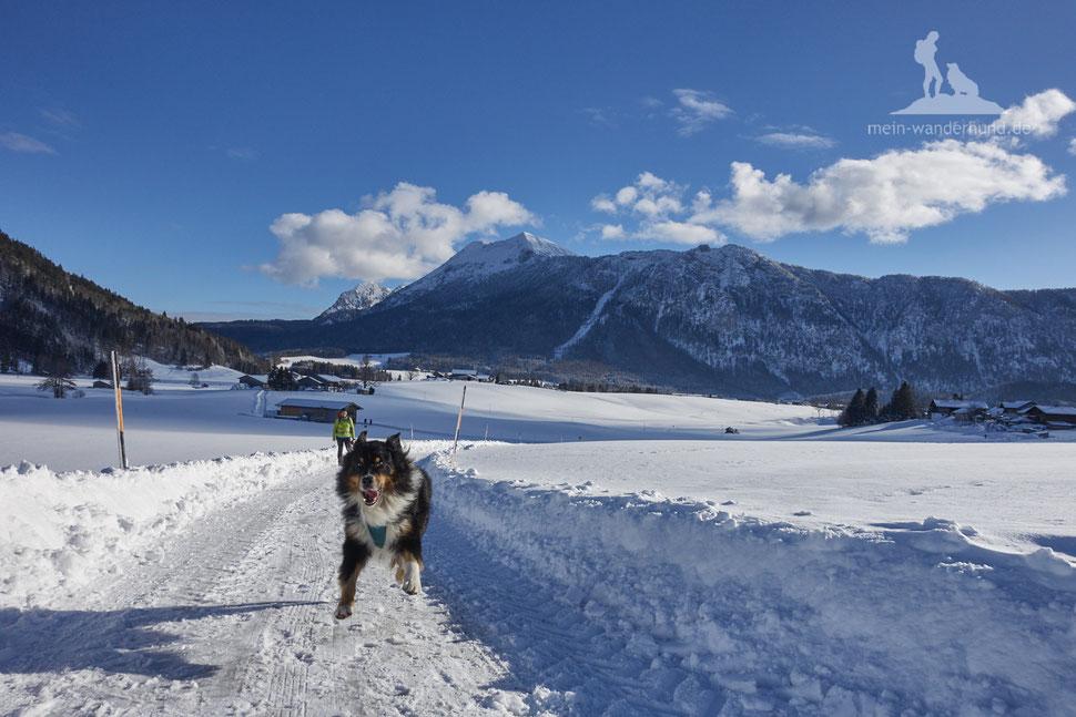 Wandern mit Hund, mein Wanderhund Ari, Andrea Obele, Inzell, Bäckeralmrunde, winter