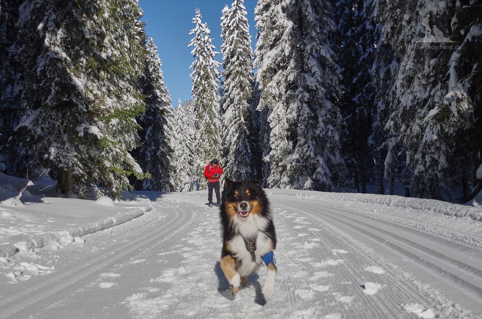 Winter Wandern mit Hund Winklmoos Wildalm Reit im Winkl Chiemgau Bayern
