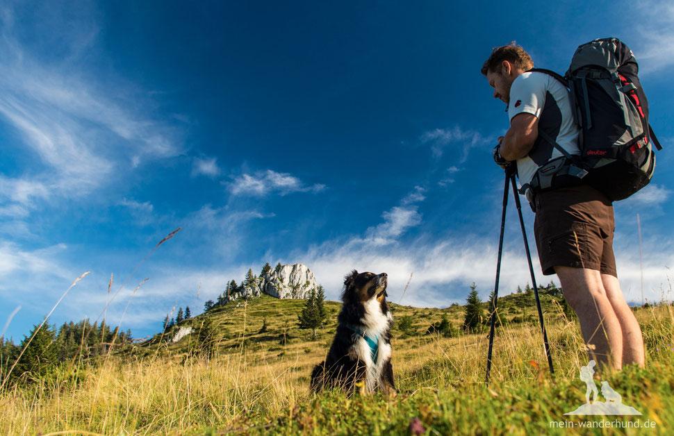 Wandern mit Hund, mein Wanderhund Ari, Andrea Obele, Fit fürs Wandern mit Hund, 5 Tipps, Wandersaison