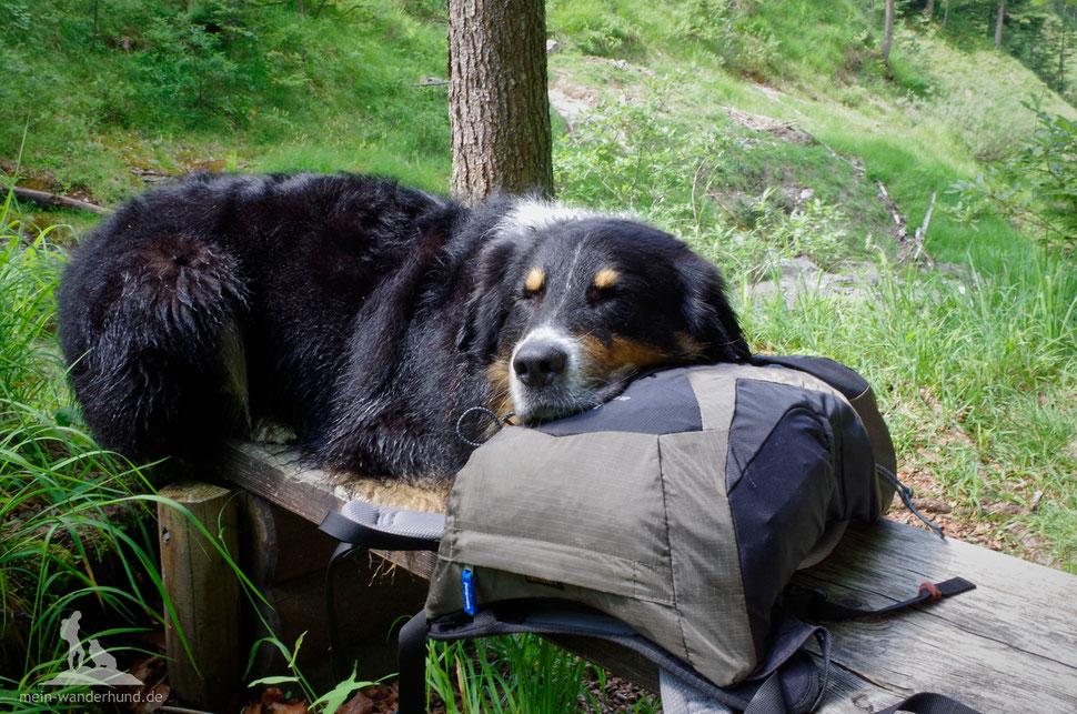 Wandern mit Hund; Rucksack; Pause Bergwandern mit Hund
