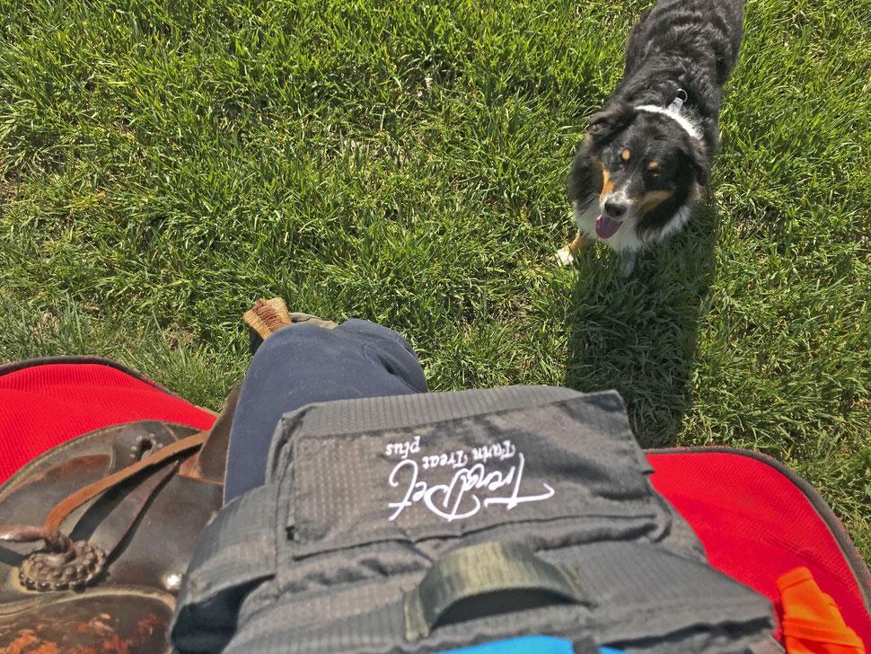 mein wanderhund; Test; Leckerlitasche für Hund und Pferd; Trend Pet Twin Treat Plus;