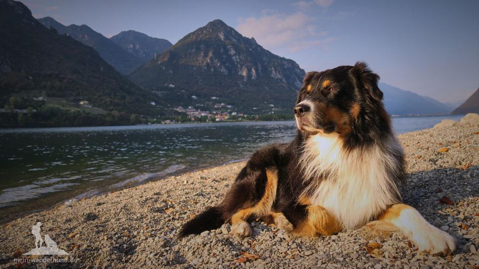 Wandern mit Hund, mein Wanderhund Ari, Idrosee, Urlaub mit hund