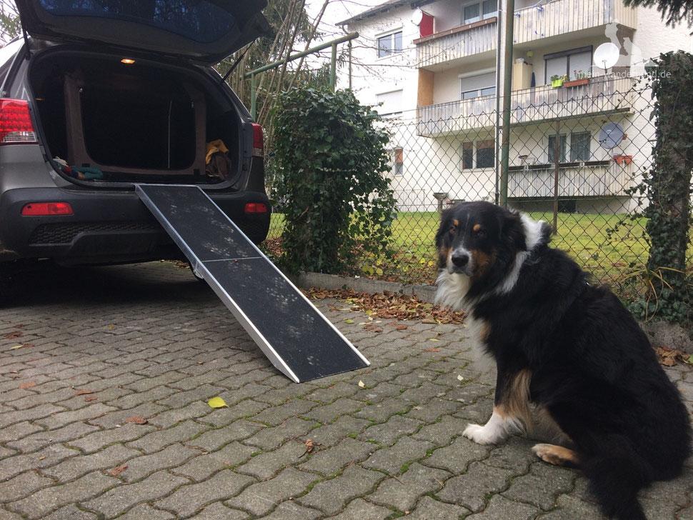 Hunderampe; Rampe für den Hund;