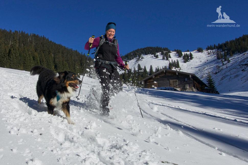 Schneeschuhwandern mit Hund; Reit im Winkl; Dürrnbachhorn; Winter-Wandern mit Hund