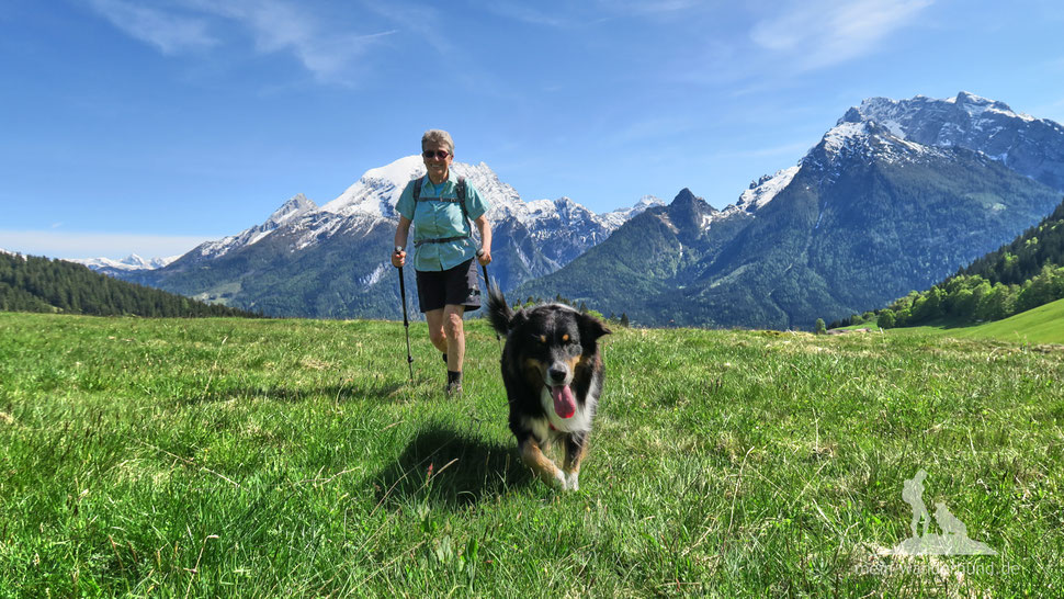 urlaub und bergwandern mit dem hund wandern mit hund. Black Bedroom Furniture Sets. Home Design Ideas