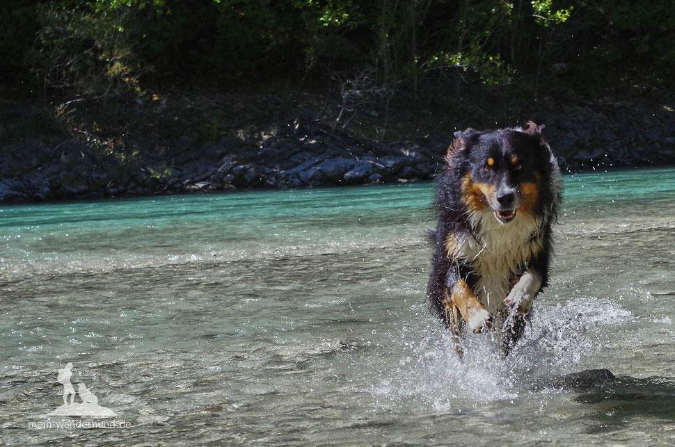 Wandern mit Hund, mein Wanderhund Ari, Andrea Obele