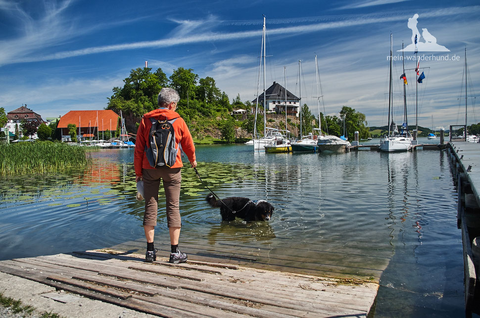 Wandern mit Hund, mein Wanderhund Ari, Andrea Obele, Mattsee, Buchberg