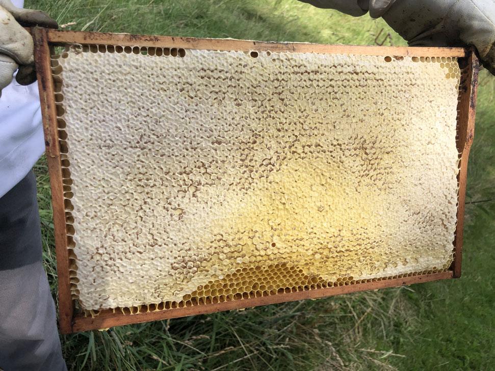 Honig, Honig aus Merkstein, Bienenzuchtverein Merkstein macht Honig, Biene, Honigwabe, Bienenverein Merkstein