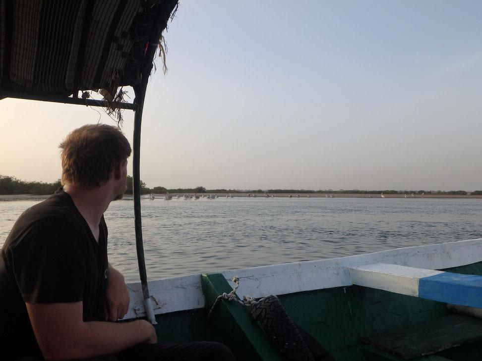 Pelicans, boat trip, Mar Lodj