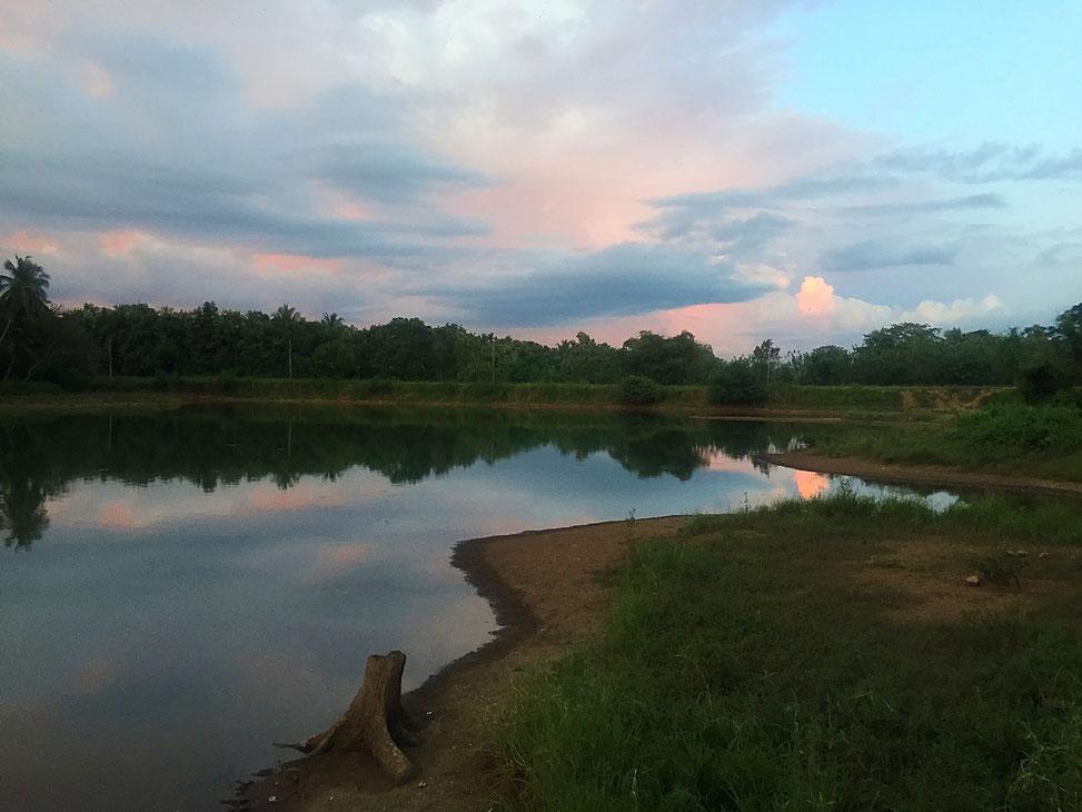 Lac derrière notre guest house à udawalawe