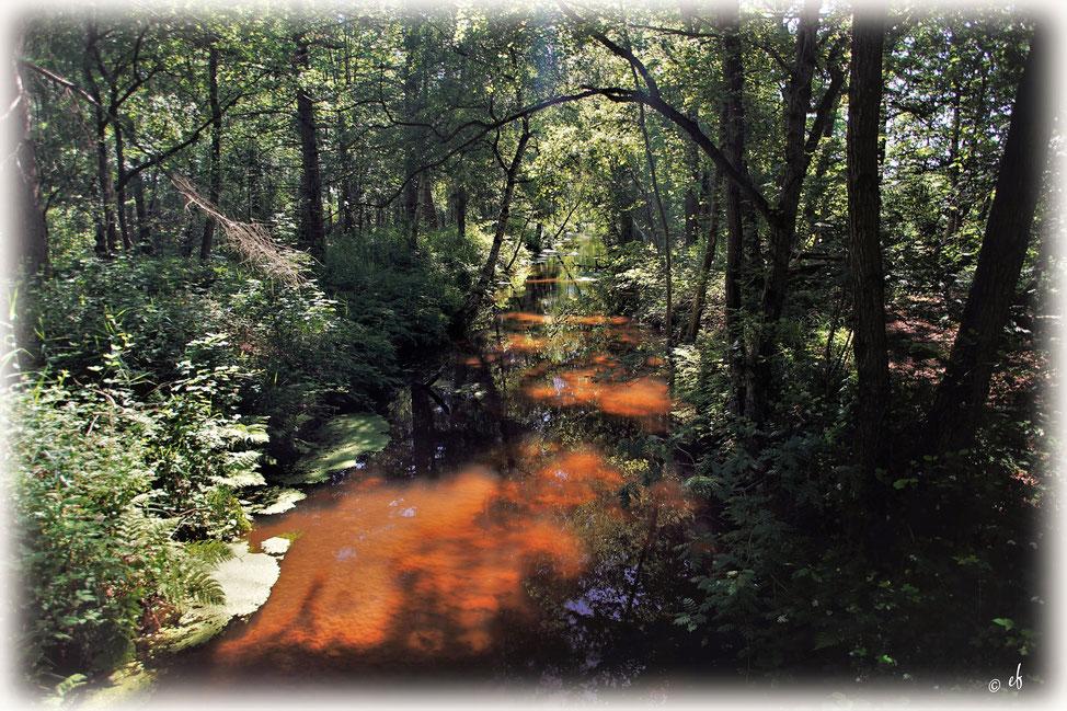 """Der """"Rote Fluss"""" (aufgenommem im Naturgebiet Schwalmauen Dilborner Benden)"""