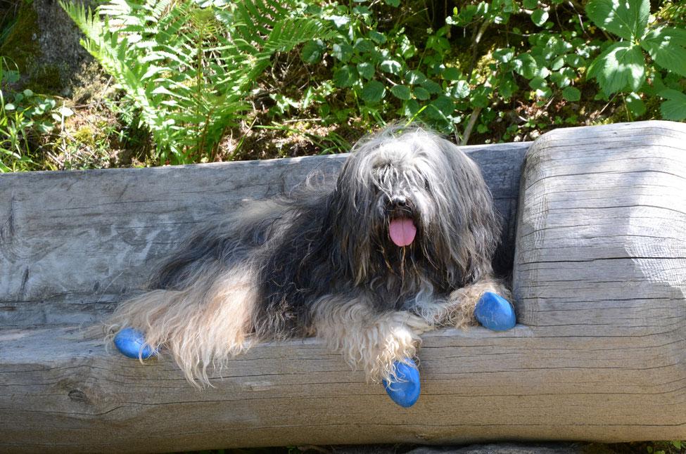 Wandern mit Hund, Wandern mit Hund mit Handicap, empfindliche Ballen