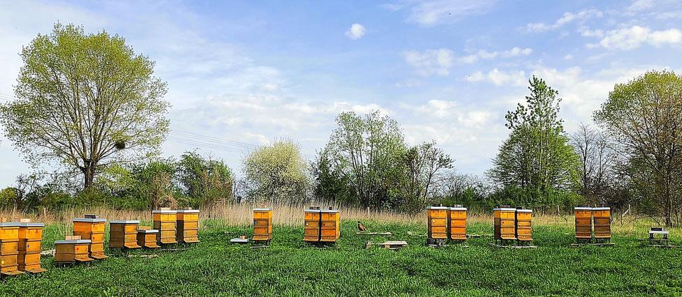 Bienenvölker in der Stolper Heide.