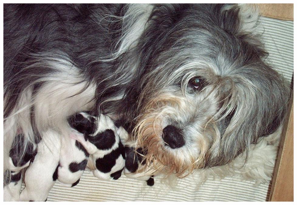 Amy-Tinka mit Welpen im Jahr 2000