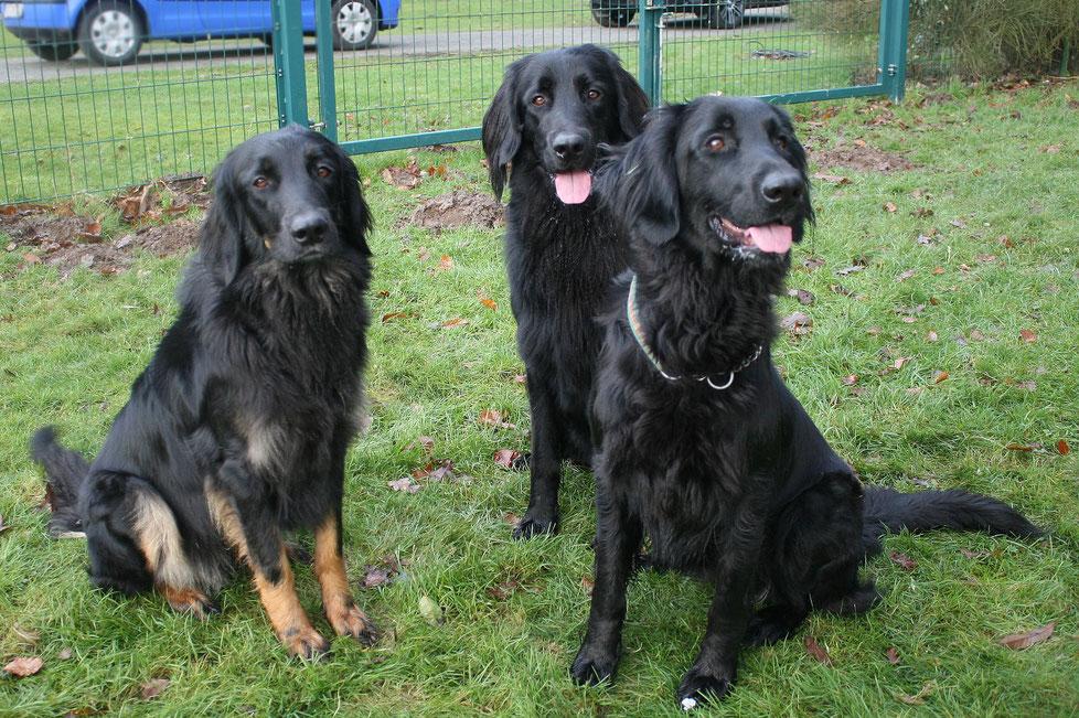 Das Trio: Arya, Aemon und Asta