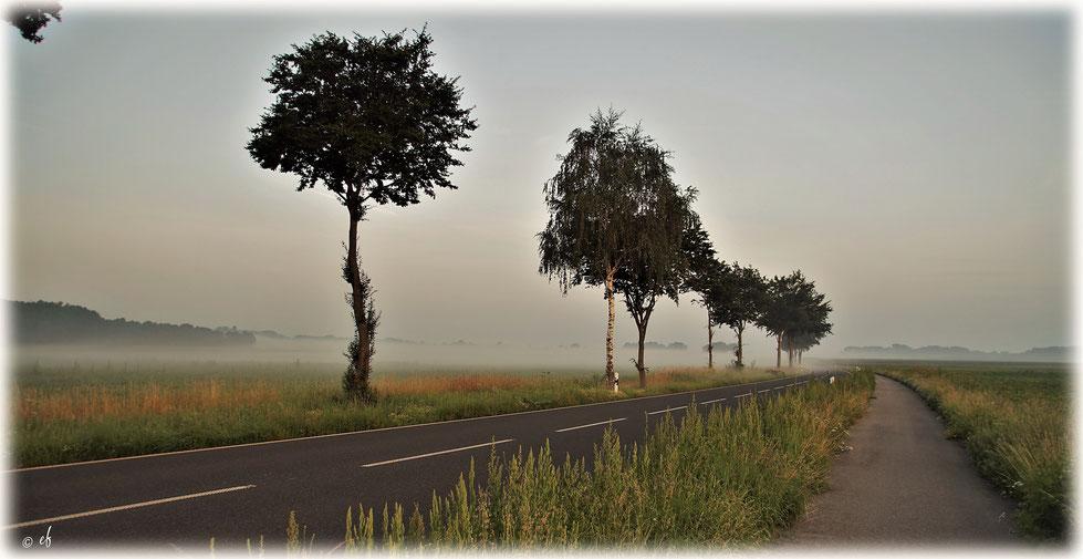 Eine Landstraße am frühen Morgen im Selfkant